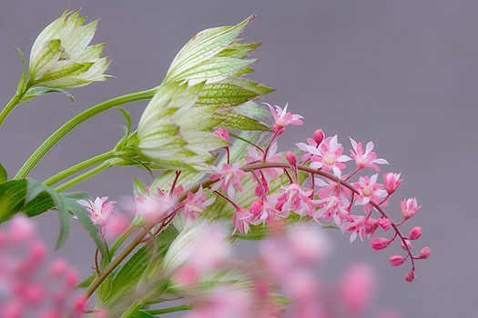 Closeup of pink and white flowers