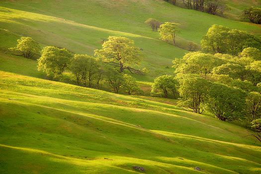A green field with a scattering of trees in long afternoon shadows
