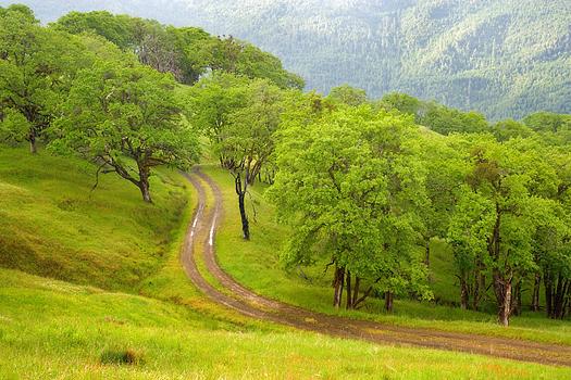 A winding dirt path through a green wood