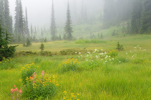 A meadow of grass and flowers in a misty mountain setting