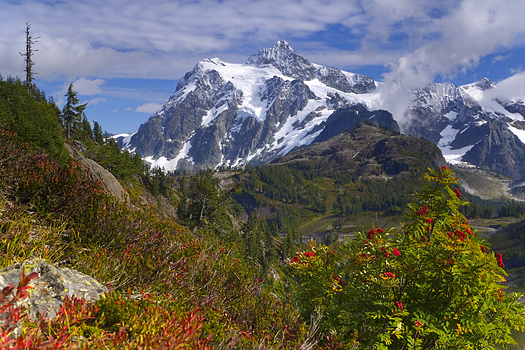 Snowy mountains with foliage in the forefront