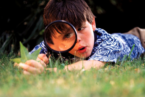 Young boy with a magnifying glass peering at a blade of grass