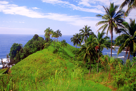 Hillside with bushes and palm trees near the ocean