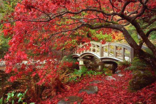 Japanese Garden by Don Paulson