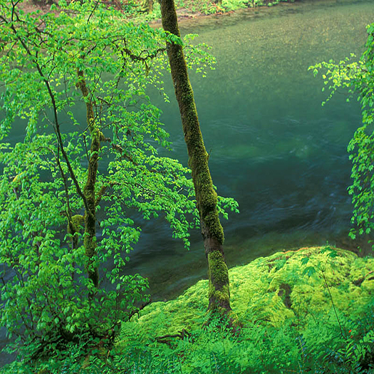 Lewis River by Don Paulson