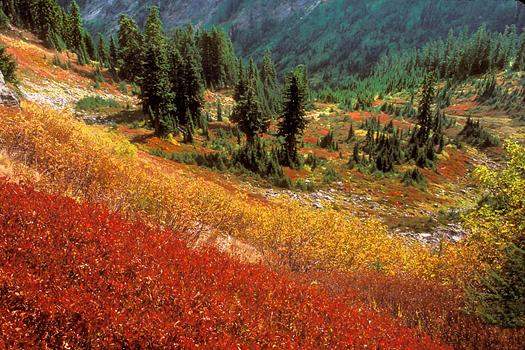 Fall Poet Ridge by Don Paulson