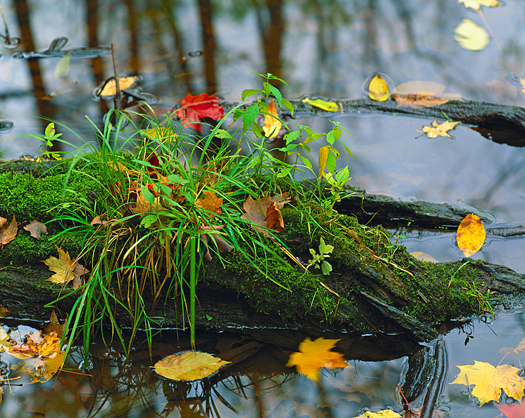 A log, leafs, and gras in a pond