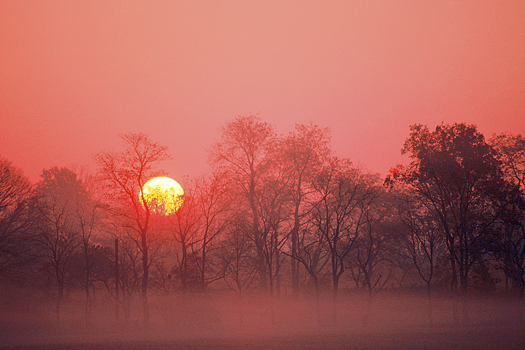 The sun setting behind trees in a misty forest