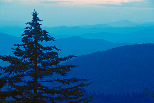 Silhouetted fir tree against a layered blue mountain background