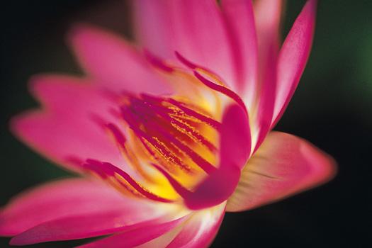 Close-up pink flower