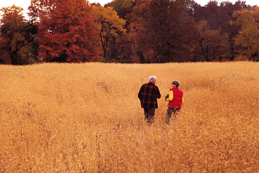 Grandfather and grandson in a wheat field