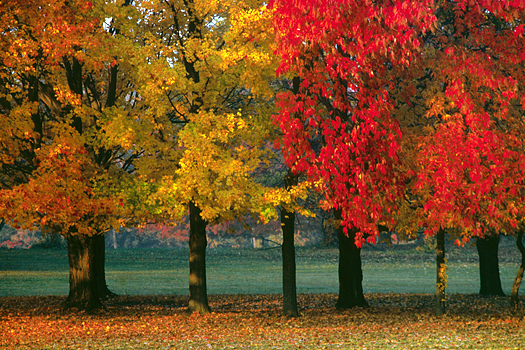 Autumn trees in a public park