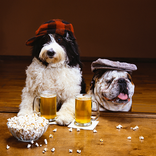Two dogs drinking beer
