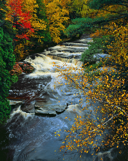 River with trees - Autumn colurs - Fall