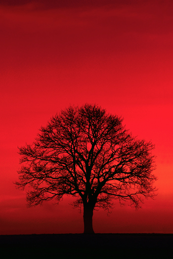 Single silhouetted tree against red background
