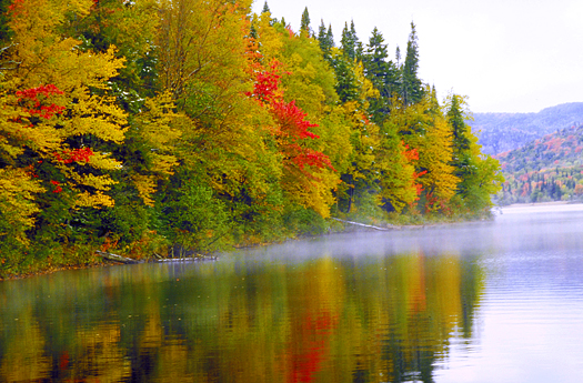 Fall colored trees on the banks of a river