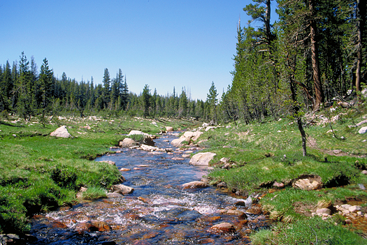 Bubbling mountain stream through a meadow