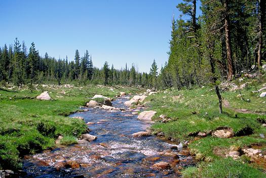 Bubbling mountain stream through a meadow