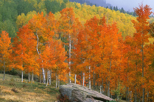 Aspen Rock by Don Paulson