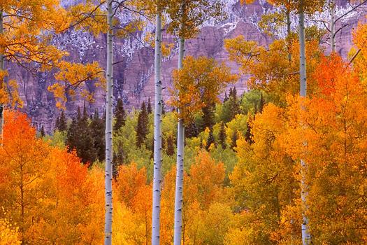 Owl Creek Pass, Colorado By Don Paulson