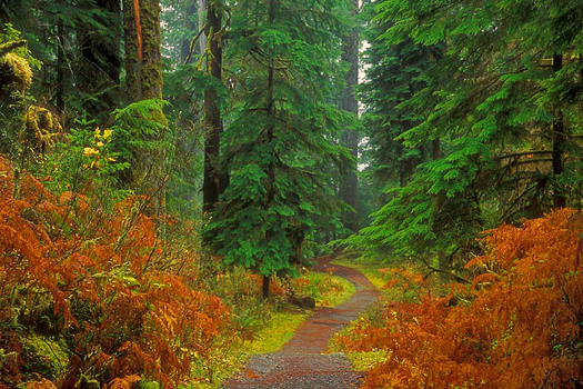 Quinault Trail by Don Paulson