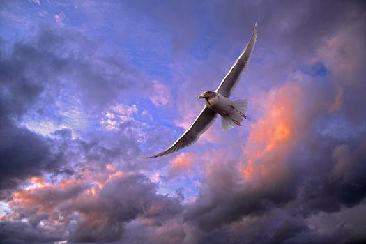 Soaring white bird by Don Paulson