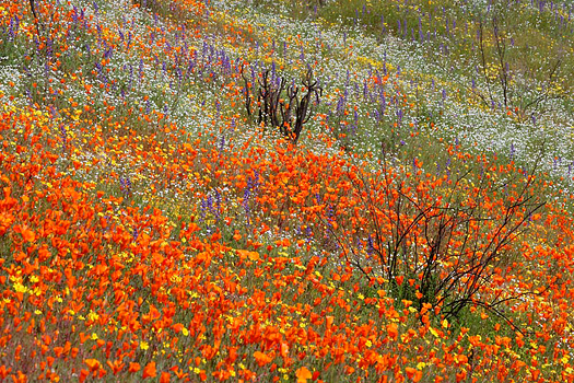 A field of wildflowers by Don Paulson