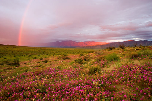 Rainbow - Anza Borrego By Don Paulson