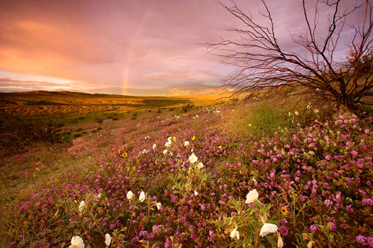 Rainbow in Anza Borrego State Park by Don Paulson
