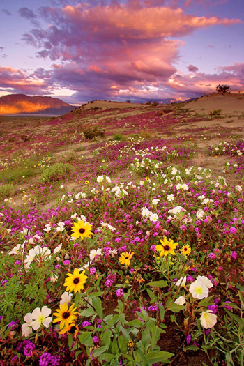 Evening light, Anza Borrego State Park, CA by Don Paulson