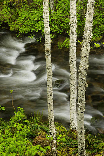 Rushing stream by Don Paulson