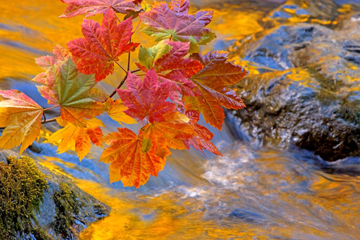 Autumn leaves over a river by Don Paulson