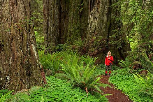 Prairie Creek Redwoods State Park, CA
