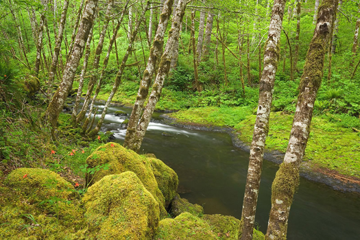 Nestucca River, Oregon by Don Paulson