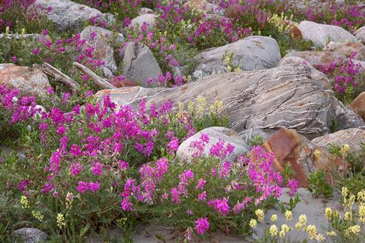 Rock Garden, Alsek River, Alaska by Don Paulson