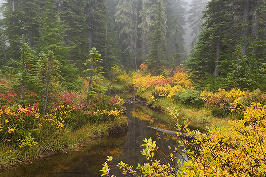 Misty forest in Fall by Don Paulson