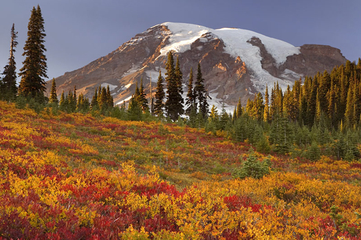 Mount Rainier National Park by Don Paulson