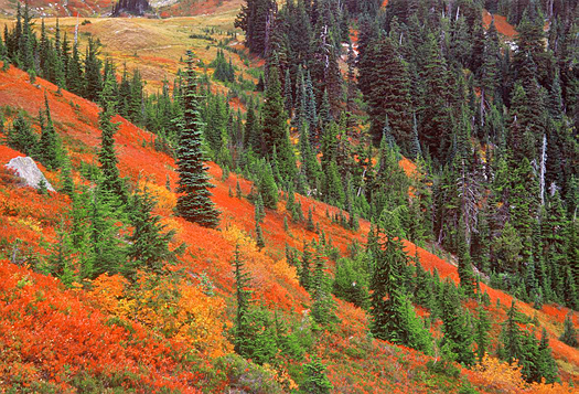 Fall trees on a hillside - Autumn