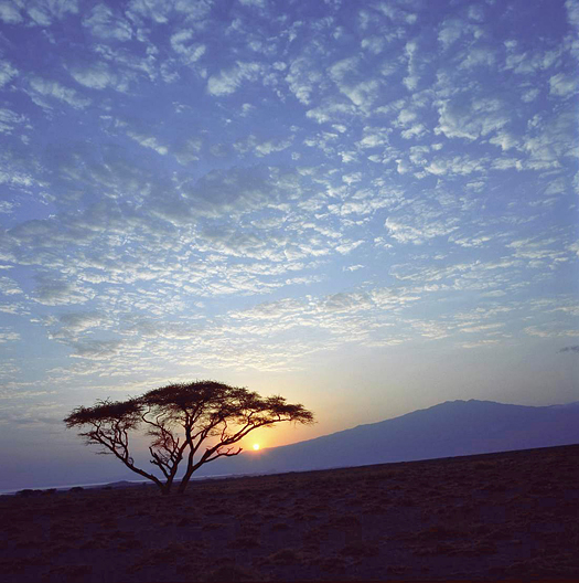 Acacia tree, sun low on horizon at Lake Natron
