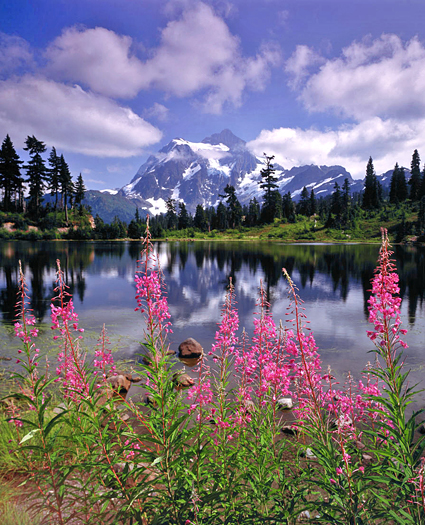 pink flowers. mountain lake