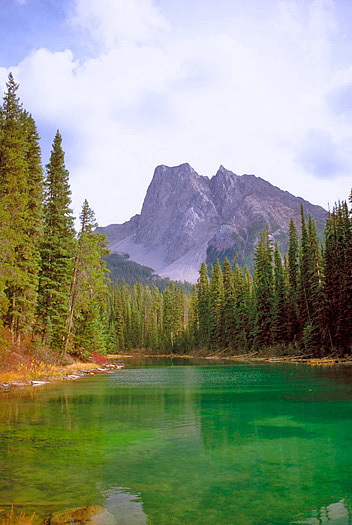 Forest with green lake and mountains in background