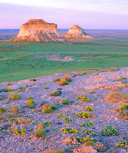 Pawnee Buttes Wildflowers - Pawnee National Grassland, northeastern Colorado by John Fielder