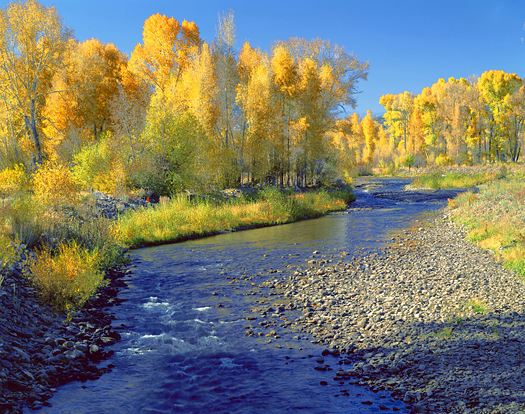 Ohio Creek - Gunnison National Forest near Crested Butte by John Fielder