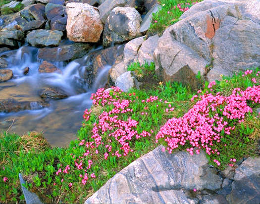Mountain Laurel, Sawtooths - Mount Zirkel Wilderness near Steamboat Springs by John Fielder