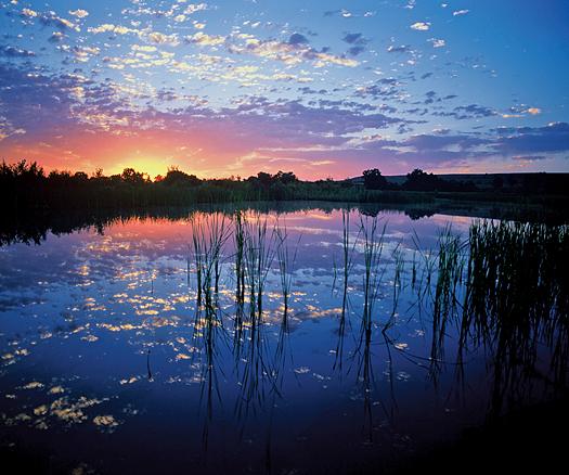 Wetlands Sunrise by Robert Castellino