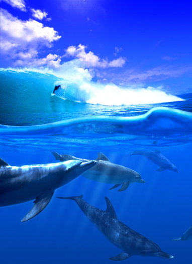 Dolphins and a body surfer by Elan Sunstar