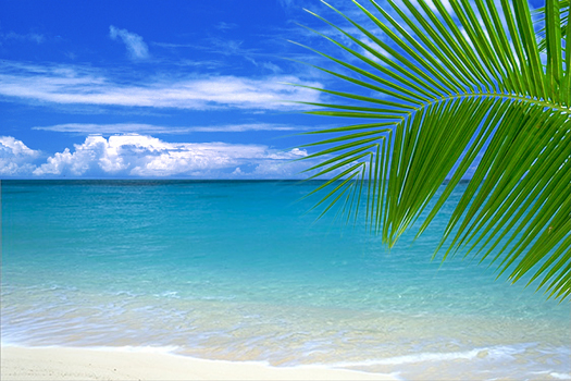 Beach with palm leaf by Elan Sunstar