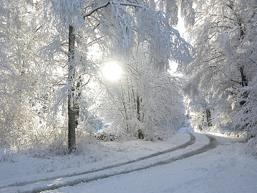 A Winter road with snow, tire tracks and snow-covered trees
