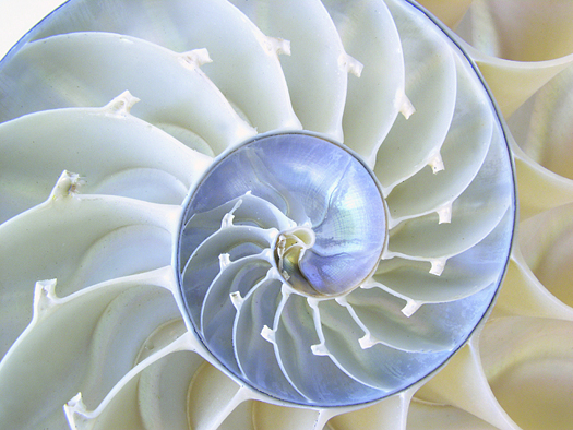 Beautiful mother of pearl in a stunning Nautilus shell