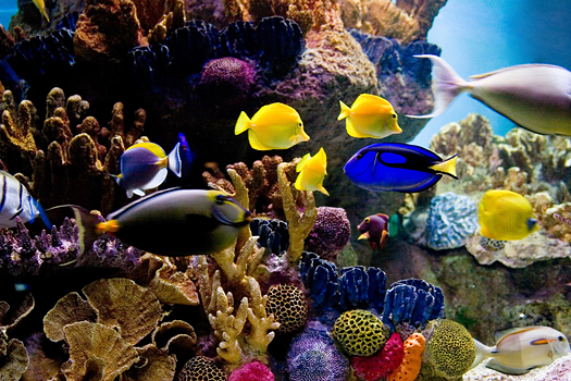 Colorful ocean fishes in coral